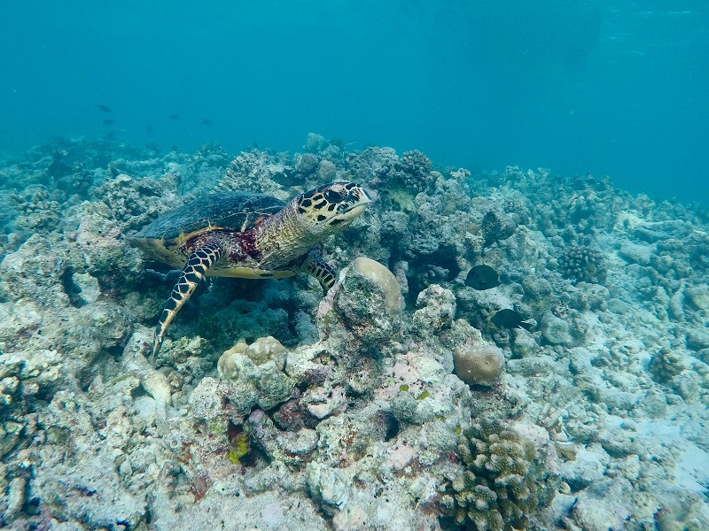 Snorkelling in the Maldives - Private boat charters